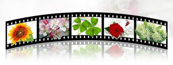 How to Download and Use Windows Movie Maker